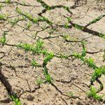 Caldrà limitar l'accés als espais naturals (Gabriel Borràs) i autoritzar bypass de sediments a l'Ebre (Matilde Font) a 'Emergència climàtica' Ràdio4 12/9/2020
